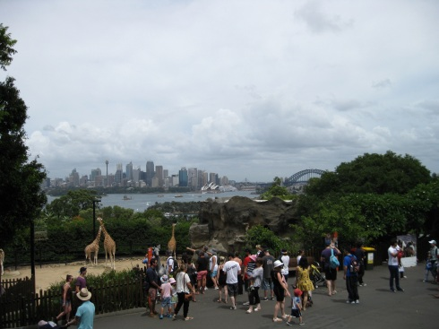 The wonderful view of Sydney from inside the zoo.