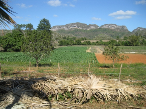 Tobacco fields in the Vinales valley.